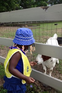 Feed the Goats